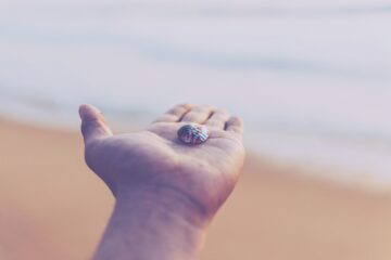 selective focus photo of white and red seashell on top of person's left palm